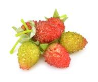 假莓果 免版税图库摄影