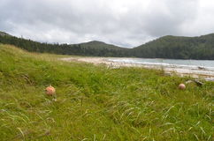 假装海湾--海角斯科特省公园 免版税库存图片