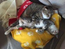 偎依兄弟和姐妹的猫 免版税图库摄影