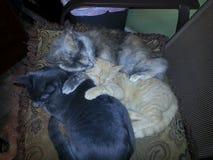 偎依在椅子的三只猫 库存照片