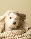 偎依的狗 免版税图库摄影