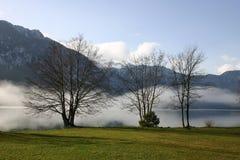 偏僻的三个结构树 库存图片