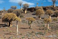 偏僻的乡下许多颤抖结构树 库存图片