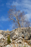 偏僻的倾斜石结构树 免版税图库摄影