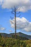 偏僻的停止的结构树 库存照片