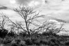 偏僻的光秃的树在内地澳大利亚,北方领土 库存照片