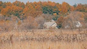 偏僻的农村房子和干燥灰色干草原草在深刻的秋天 股票视频