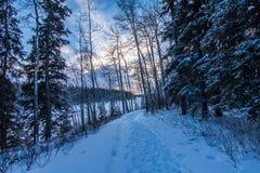 偏僻的寒冷冬天足迹 库存照片