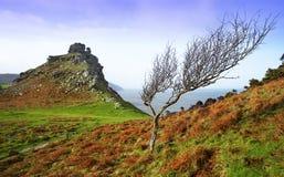 偏僻的岩石结构树 图库摄影