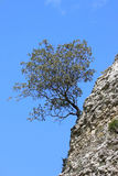 偏僻的岩石西班牙春天结构树 库存图片