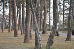 偏僻的常设树 免版税库存照片