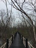 偏僻的感觉孤零零苍白走道森林美洲红树森林 免版税库存照片