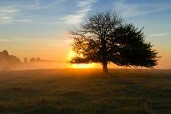 偏僻的日出结构树 免版税图库摄影