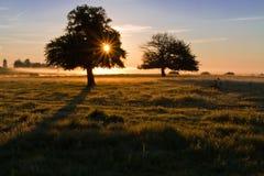偏僻的日出结构树 免版税库存图片