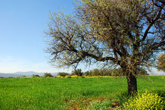 偏僻的春天结构树 库存照片