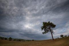 偏僻的杉树和多云风雨如磐的天空 免版税库存照片