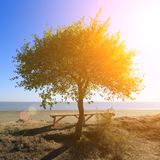 偏僻的树和一条长凳在它附近在高海滨 免版税库存图片