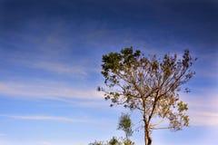 偏僻的树在反对日落天空的秋天 免版税图库摄影