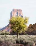 偏僻的树在大峡谷沙漠有一个高岩石的在背景中 免版税库存图片