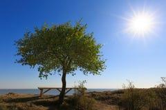 偏僻的树在高海滨和一个长木凳增长在它附近在午间太阳的光芒 库存照片