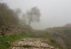 偏僻的树在Acrocorinth 免版税库存图片