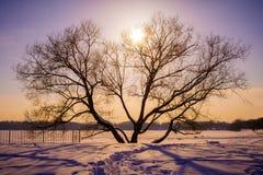 偏僻的树黑暗的剪影,在橙色日落对面 免版税库存图片
