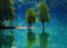 偏僻的树:在一个蓝蓝气氛爸爸的太阳下树显示儿子如何洗浴 库存图片