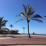 偏僻的棕榈树和天空蔚蓝 免版税库存图片