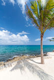 偏僻的棕榈树 免版税库存图片