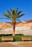 偏僻的棕榈树 免版税库存照片