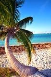 偏僻的棕榈树 库存照片