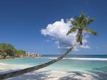 偏僻的棕榈树 库存图片