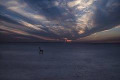 偏僻的椅子在盐湖 库存照片