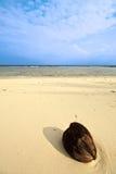 偏僻的椰子 免版税库存照片