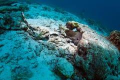 偏僻的海鳗泰国 免版税库存照片