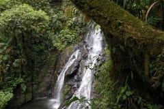 偏僻的瀑布哥斯达黎加 免版税库存图片