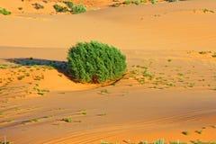 偏僻的灌木在沙子海运  免版税图库摄影