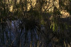 偏僻的牛轭湖在春天河谷 库存图片