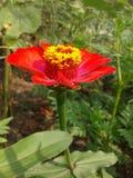 偏僻的红色花使您每一天感觉 库存图片