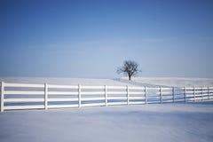 偏僻的结构树冬天 免版税图库摄影