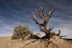 偏僻的结构树和蓝天 免版税图库摄影