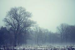 偏僻的结构树在春天与雪和神秘的雾的领域 库存照片