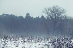 偏僻的结构树在春天与雪和神秘的雾的领域 免版税库存图片