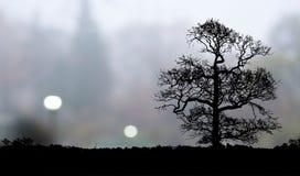 偏僻的结构树横向 免版税图库摄影