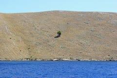 偏僻的结构树海岛-地中海横向 库存图片