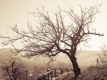 偏僻的结构树 免版税图库摄影