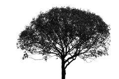草原蓝天舞蹈_在白色隔绝的非洲树 库存图片. 图片 包括有 徒步旅行队, 肯尼亚 ...