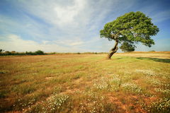 偏僻的结构树 免版税库存照片