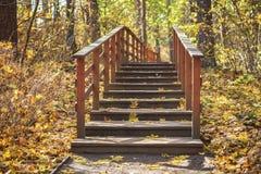 偏僻的老长木凳在叶子,秋天森林季节,怀乡心情概念下的空的秋天公园 图库摄影