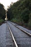 偏僻的舒展在森林之间的火车轨道 免版税库存图片